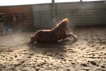 Hünnekens Quarter Horses